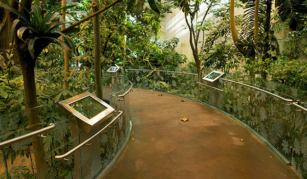 biodome jungle